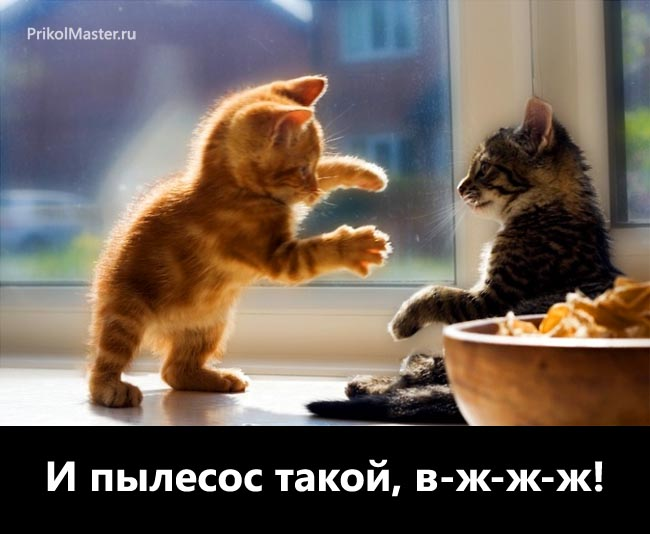 Приколы Кошки