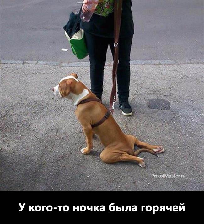 Приколы Собаки